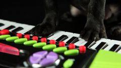 Как играть на клавишных
