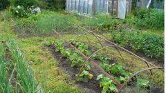 Как разбить огород