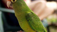 Как держать попугаев