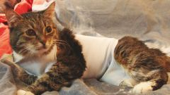 How to sew a blanket for the cat