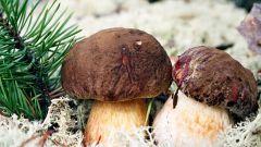 Как заработать на грибах