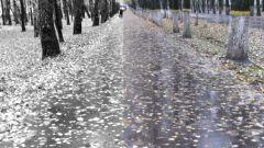 Как сделать цветную картинку чёрно-белой в Photoshop
