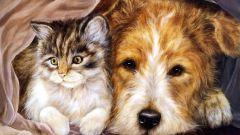 Как нарисовать кошку и собаку