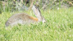 How to soak the hare
