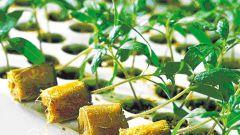 Как выращивать рассаду для продажи