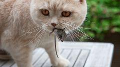 Как отпугнуть мышей