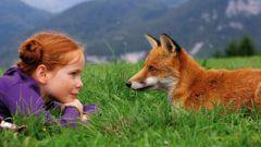 Как приручить лису