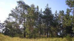 Как арендовать лес
