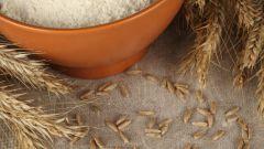 Как варить кашу из пшеничной крупы