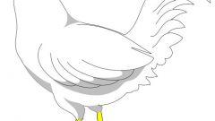 Как рисовать курицу