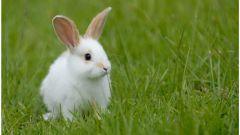 Как поить кролика