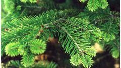 Как сохранить елку зеленой