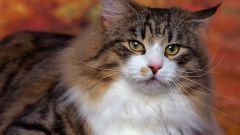 Как избавиться от кошачьих меток