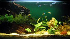 Как определить жесткость воды в аквариуме
