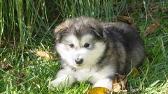 Как узнать возраст щенка