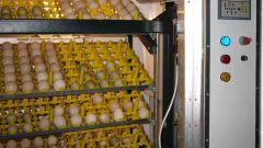 Как вывести цыплят в инкубаторе