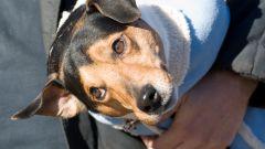 Как сшить переноску для собак