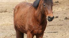 Как воспитать лошадь
