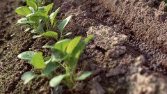 Как вспахивать почву на склонах
