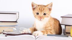 Как уничтожить запах кошачьей мочи