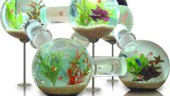 Как завести аквариумных рыбок