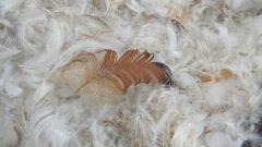 Как стирать пух из подушек