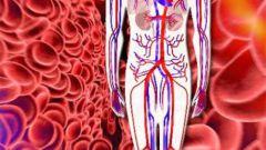 Как увеличить кровообращение