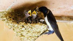 Ласточкино гнездо: как сделать рисунок карандашом