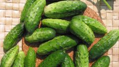 How to grow a good crop of cucumbers