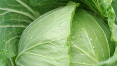 Как отделить листья капусты