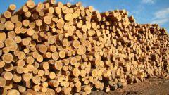 Как продать лес в 2018 году
