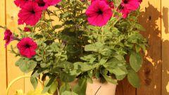 Как поливать цветы во время отпуска