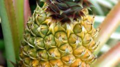 Как размножить ананас