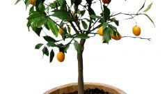 Как вырастить дерево из семени