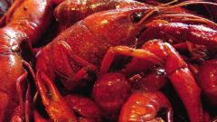 How to choose the crawfish