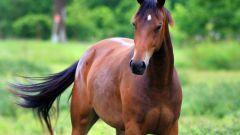 Как научить лошадь сидеть
