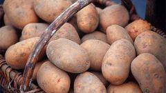 Как подобрать ранние сорта картофеля