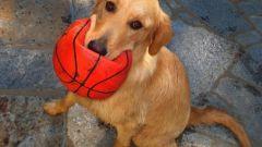 Как давать собаке глистогонное