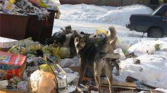 Как заключить договор на вывоз твердых отходов