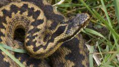 Как защититься от змей