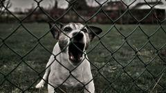 Как сделать отпугиватель собак