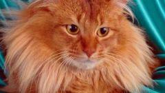 Как промывать кошке нос