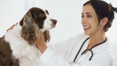 Как лечить печень у собаки