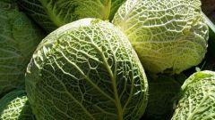 Как хранить савойскую капусту