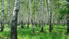 Почему нужно защищать деревья