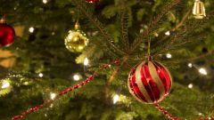 Что делать, чтобы новогодняя ёлка не осыпалась раньше срока