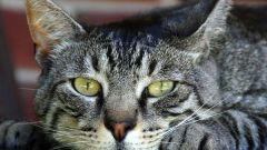 Страшнее кошки зверя нет: народные приметы и поверья