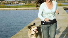 Как продлить жизнь собаке