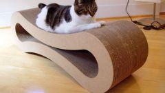 Как отучить кошку царапать мебель