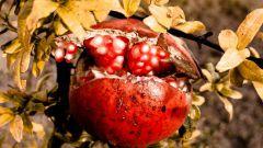 Как вырастить экзотические фрукты